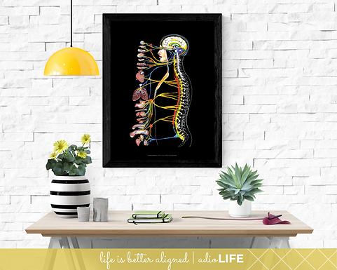 ANS Wall Art - Chiropractic Poster (Black)