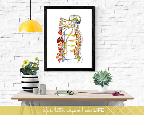 ANS Wall Art - Chiropractic Poster (White)
