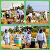 hive inspection.jpg