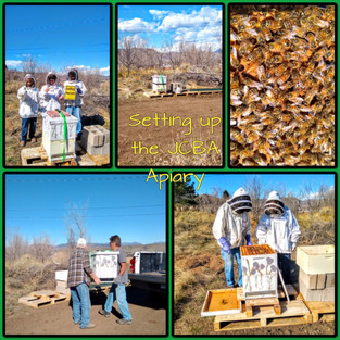 setting up the apiary.jpg