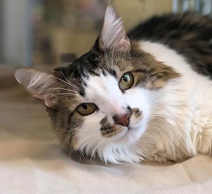 Vanessa - Animal Care Assistant
