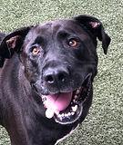 Kayla- Animal Care Assistant
