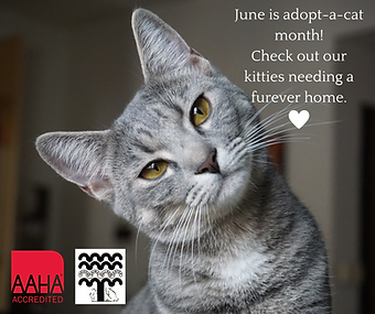 June is adopt-a-cat month!.png