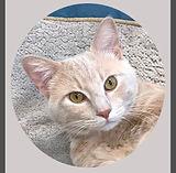 Kalin - Veterinary Technician