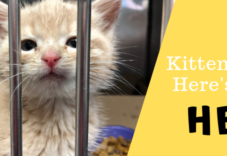 Kitten Season Is here!