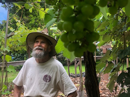Through the Grapevine: Getting to Know Subtropical Grape Varieties
