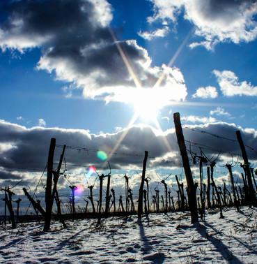 Winterweingarten1-1.jpg