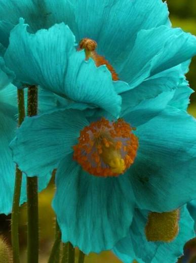 teal flowers.jpeg