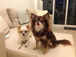 Dax & Kiko