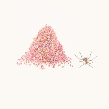 Lantana and spider