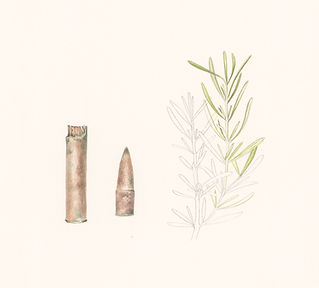 Rosemary-and-bullet-A_edited.jpg