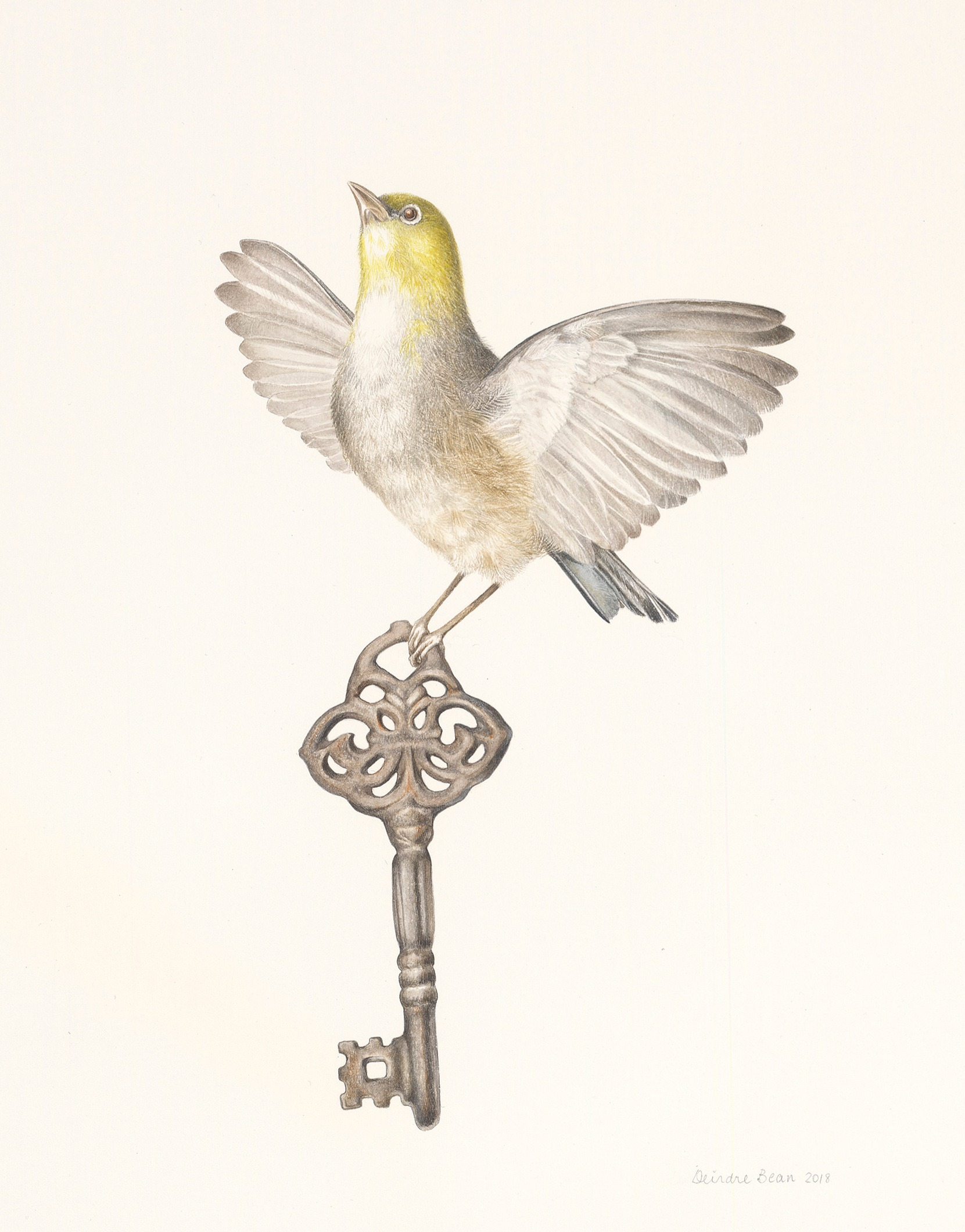 Silvereye and key