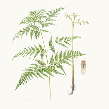 Bracken fern and cicada