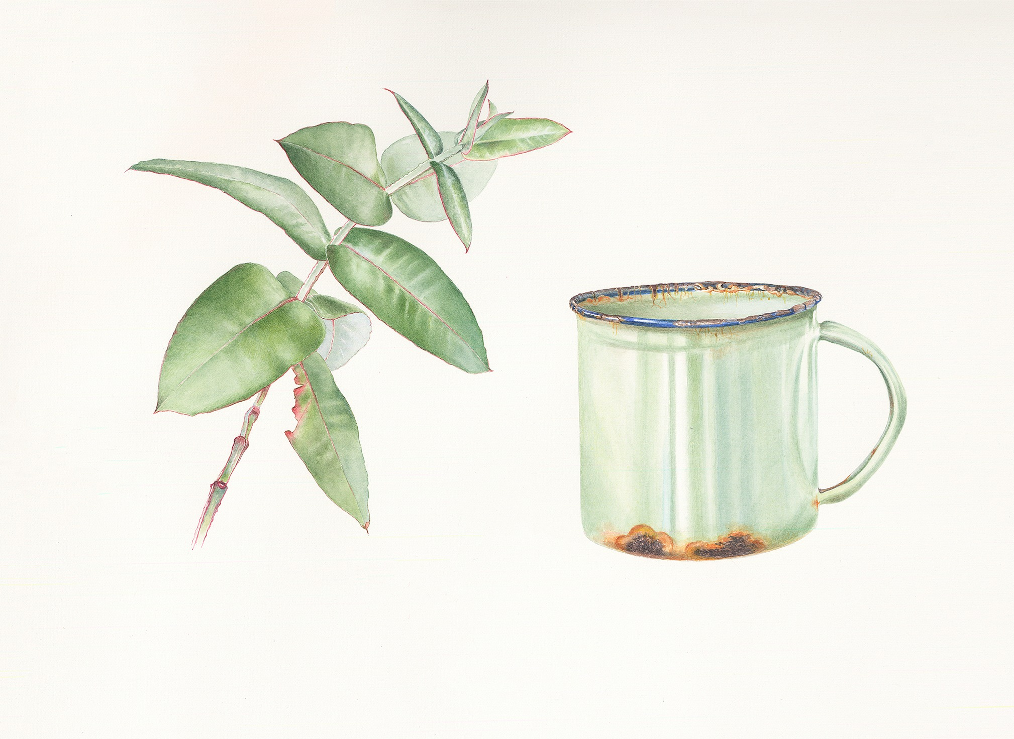 Gum leaves and enamel cup