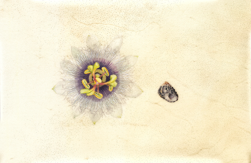 Passion flower and periwinkle