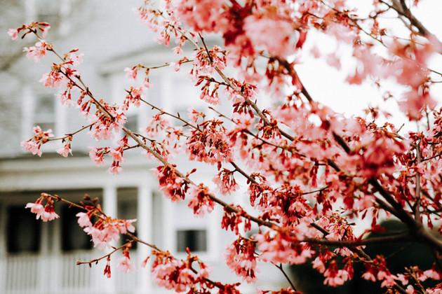 spring-3.jpg