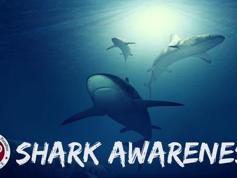 Shark Awareness!