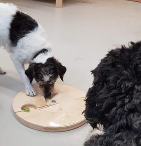 """Das Hundespielzeug ist fertig. Das """"Gudeli"""" kann gefunden werden"""