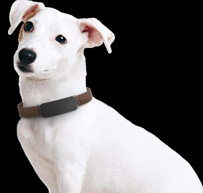 termékgyártás kutya_javit.png