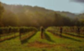 Maple Springs Vineyard Albarino wines best Pennsylvania white wine
