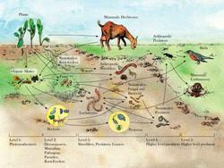 Soil-Food Web