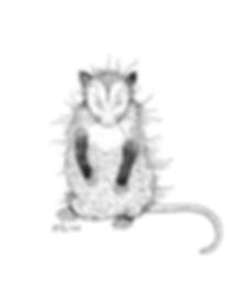 Opossum1 - Elisa J.png