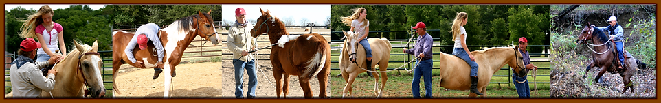 various horse and rider training