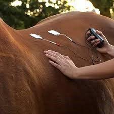 tens horse.jpg