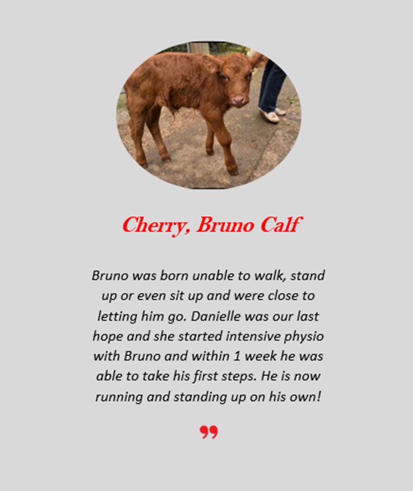 Cherry Bruno.png