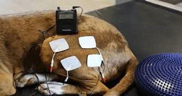 nmes dog.jpg