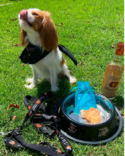 Tito's Vodka. Atena the Cavalier.