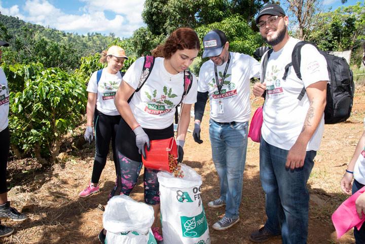Starbucks llevó a 100 de sus partners como voluntarios para el décimo cuarto recogido de café.