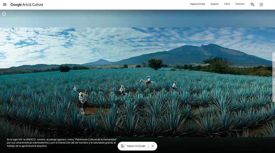 Agaveros trabajando en los campos de tequila, en el estado de Jalisco, México Fundación Beckmann A.C. - Google Arts & Culture