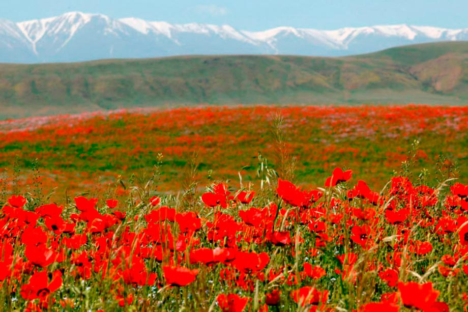 Aksu Zhabagly Nature Reserve