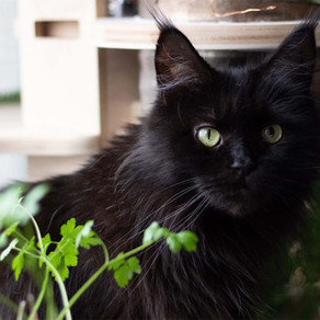 7 Changes We Noticed When We Transitioned Our Cat to a Raw Diet