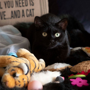 9 Ways to Playfully Engage Your Cat