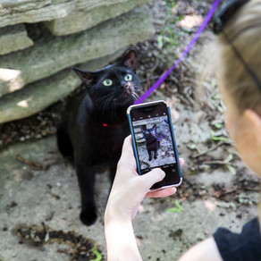 100k Followers: How I Grew My Cat's Instagram