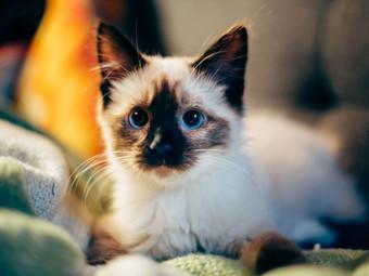 Без кота и жизнь не та: 5 причин завести пушистого питомца
