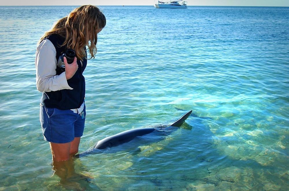 Дельфины  Monkey Mia