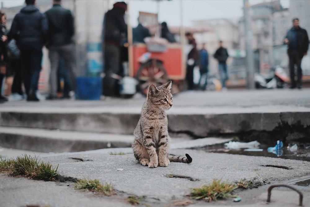 Коты в Стамбуле, Турция