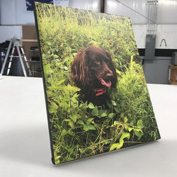 For all you dog lovers! Check out this canvas we just printed