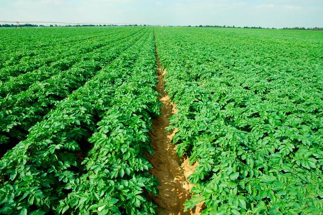 Very Potatoes Farm