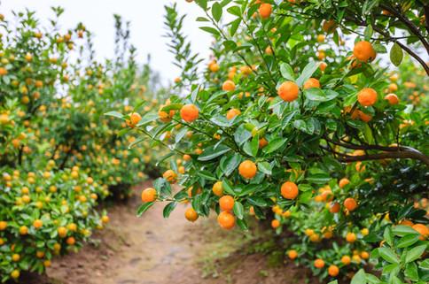 Very Tangerine Farm