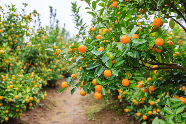 Very Tangerine Farm