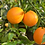 Thumbnail: Very Oranges (Navel) 2.5 Kg
