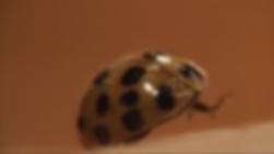 closeup lady bug