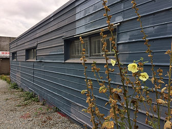 Siding Lines and Plants.JPG