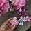 Thumbnail: Каркасные человечки – парочка.