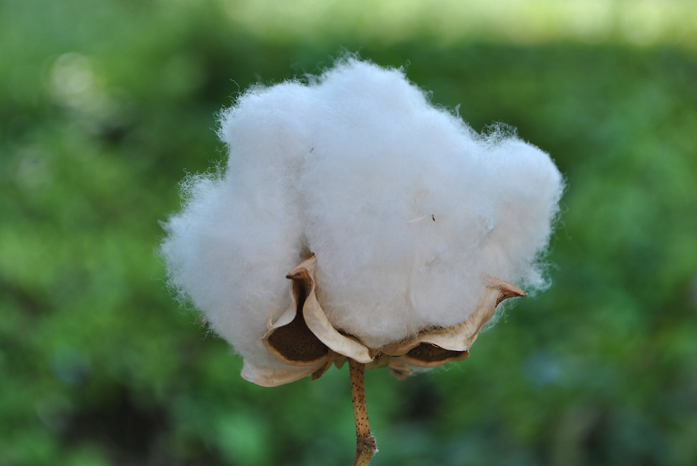 身体と呼吸と心と。 綿