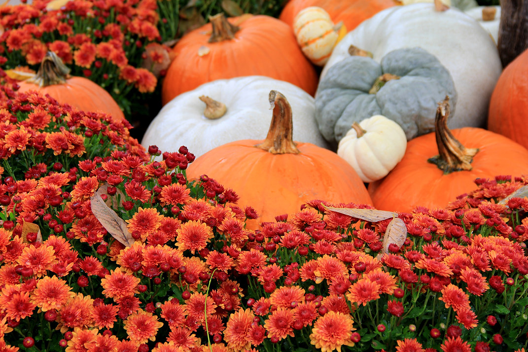 Large and small pumpkins tucked into bed